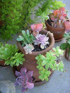 Succulents ~ love the colors!