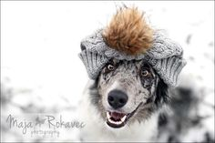 Funny border collie ready for winter. Photography by Maja Rokavec