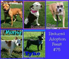 #adoptable at #Joliet township animal control on Facebook in illinois