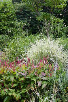 Persicaria amplexicaulis Firetail, Miscanthus sinensis Variegatus, etc in flower garden perennial bed combination