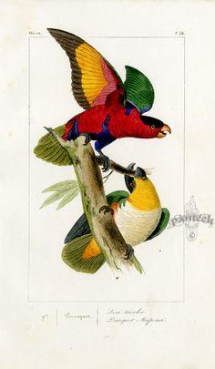 Lemaire Oiseaux Exotiques Birds 1836. Обсуждение на LiveInternet - Российский Сервис Онлайн-Дневников