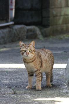 A little kitteh on Muzuki Island, one of the Kutsuna Islands of Matsuyama City #cat #Shikoku #Muzukijima