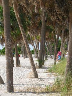 My favorite place in Florida.... Fred Howard Park, Tarpon Springs