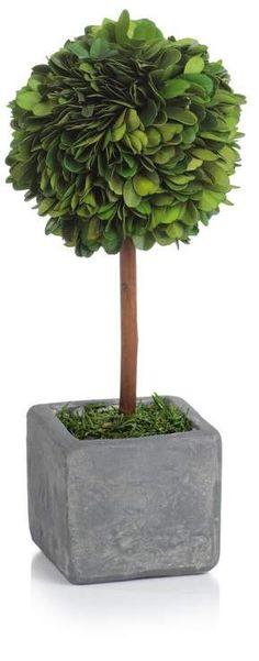 Ophelia & Co. Boxwood Topiary in Pot Ophelia & Co. Boxwood Topiary in Pot Boxwood Tree, Boxwood Plant, Dracaena Plant, Ficus Tree, Boxwood Topiary, Potted Trees, Topiary Plants, Ivy Plants, Foliage Plants