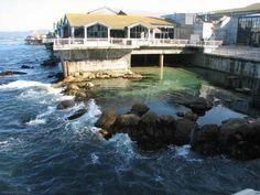 The Monterey Aquarium Google Image Result for http://images.topix.com/gallery/up-KO19RMGRNFFPMV8I.jpg