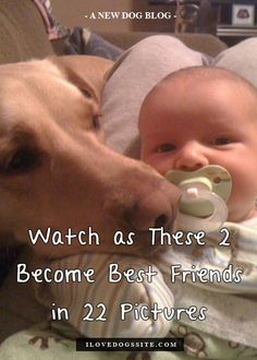 Have you seen this yet?! Don't miss the last pic! http://theilovedogssite.com/watch-as-these-2-become-best-friends-over-2-years-and-22-pictures/