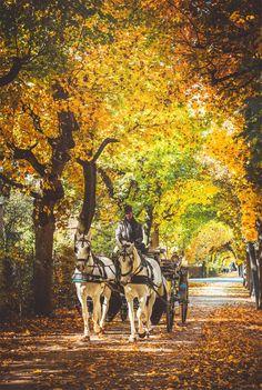 "Dreamy Autumn. - <a href=""https://www.facebook.com/JULIADAVILALAMPE/"">FACEBOOK</a> <a href=""https://www.instagram.com/chaulafanita/"">INSTAGRAM</a>"