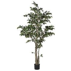 Variegated Ficus Tree ($320) ❤ liked on Polyvore featuring home, home decor, floral decor, flower home decor, branch home decor, flower basket, plastic basket and fake flower stems