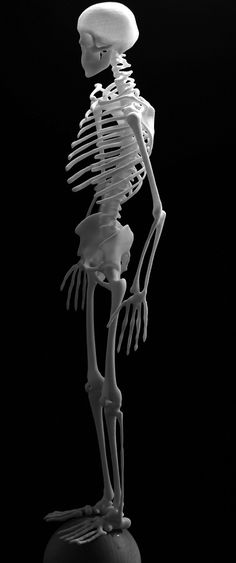 Skeleton from PRinted cat