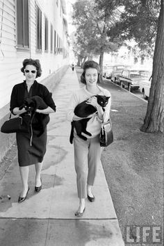 Black cat auditions in Hollywood, circa 1961 from www.retronaut.co -- this website is full of hours and hours of vintage love. <3