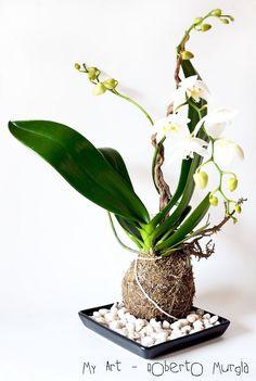 Beautiful Flowers, Kokedama, Miniature Garden, Mini Garden, Orchids, Hanging Plants, Home Garden Plants, Plants, Planting Flowers
