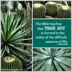 True Joy :: Francis Chan Quote :: Cactus Mosaic