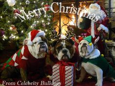 """""""We wish you a Merry Christmas and a Happy New Year!"""" #dogs #pets #Bulldogs…"""