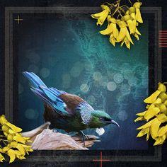 Art Print - x Nz Art, Animal Pictures, Birds, Art Prints, Gallery, Artist, Artwork, Painting, Animals