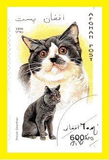 Timbre Afghanistan Chat British shorthair 3 ex ======================= Image.=> http://wamiz.com/chats/british-shorthair-43 ========================= Afghanistan 1996 - Chats Série => https://fr.pinterest.com/pin/121526889922375679/ ========================= Multicolore - Dentelé Valeur faciale = 600 AFG Référence.Y&T = 1508 cotation.2011.= 0,90 €-0,50 € ========================= bijoux de Gaby Féerie => http://www.alittlemarket.com/boutique/gaby_feerie-132444.html