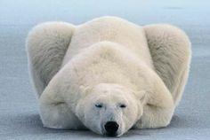 Супер-снимки от national Geographic