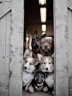 Dog gang funny cute animals dogs country look barn gang