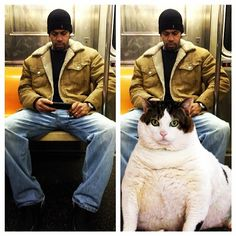 New Favorite Tumblr: Saving Room for Cats. This is what men are doing on public transport- saving room for really really big cats between their legs! It's actually nothing about dominating public space!