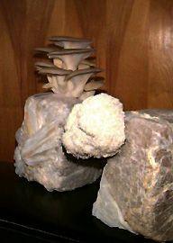 mushroom growing basics for beginners