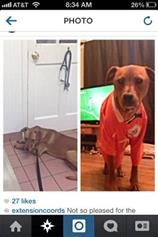 reunited Lost in Fairfield CT. FOund this on CL  Lost dog in fairfield! Lost dog in fairfield! Her name is Jozy and she wandered off last night around 9pm. She is a terrier/pitbull mix and very friendly. She responds to Joz or Jozy and unfortunately does not have tags on NEWYORK.CRAIGSLIST.ORG LikeLike ·  · Share