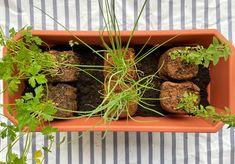 Posicione as mudinhas na terra, deixando três dedos entre elas e a boca do vaso. Foto: Arquiteca Projetos.