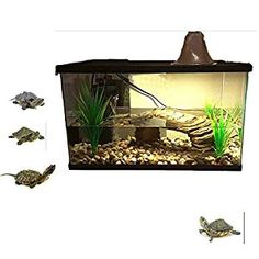 Best Tank for Red Eared Slider is one of the most basic things that you will need to provide, If you are planning to have a slider for a pet Aquatic Turtle Habitat, Aquatic Turtle Tank, Turtle Aquarium, Aquatic Turtles, Small Turtle Tank, Turtle Tank Setup, Small Turtles, Red Eared Slider Tank, Red Eared Slider Turtle