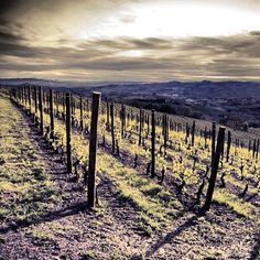 #vineyards #wine #langhe #hills -  #webstagram