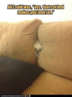 funny dog pictures - Jus Sayin