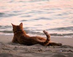 Luie poes aan het strand.