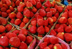 Here are some easy and delicious strawberry recipes that are perfect for when you find a good sale or are just overwhelmed with strawberries! Here are some easy strawberry recipes and ideas of great ways to use strawberries for you! Strawberry Recipes, Fruit Recipes, Healthy Recipes, Blueberry Recipes, Strawberry Glaze, Strawberry Farm, Summer Recipes, Drink Recipes, Healthy Snacks