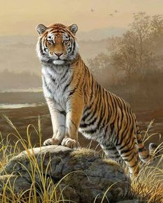 National animal of tiger hd wallpaper picture collection Tiger Artwork, Tiger Painting, Tiger Drawing, Tiger Pictures, Animal Pictures, Beautiful Cats, Animals Beautiful, Pretty Cats, Tiger Fotografie