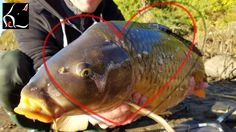 Help us build a Carp Enthusiast Community! Our Mission is to create a Carp Enthusiast Community and enable people to share their knowledge, catch photos and support other members to promote the Sport of Carp Fishing in America and around the World.   #CarpCamps #CarpEnthusiasts #CarpFishing #CarpGuides #Monster Carp #MonsterCarpUS #Passion for Carp
