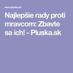 Najlepšie rady proti mravcom: Zbavte sa ich! - Pluska.sk