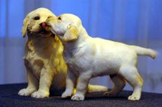 "The Andrex puppy from England investigating his waxwork at Madame Tussaud's: | 30 Photos That Will Make You Say ""Awww"""