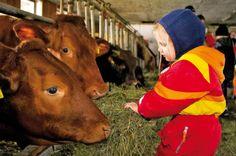 Farm Holidays, Animal Magic, Family Holiday, Farm Family, Europe, Adventure, Animals, Villach, Kids