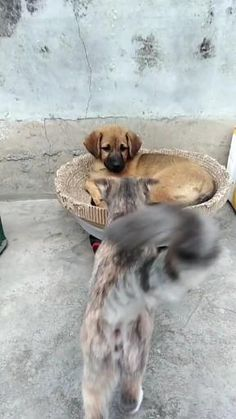 Cute Little Animals, Cute Funny Animals, Funny Cats, Cute Cats And Dogs, Animals And Pets, Gato Gif, Cute Animal Videos, Cute Creatures, Pet Birds