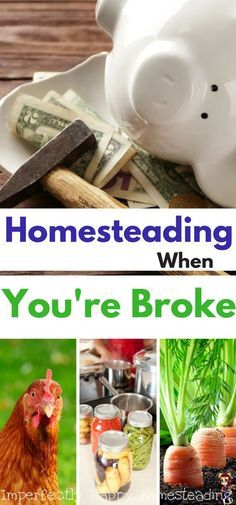 Homesteading When You're Broke. How you can start and keep your homestead with a tight budget.