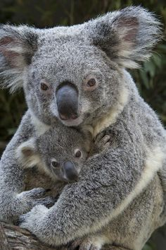 25 Incredibly Touching Wildlife Photos of Animal Moms and their Babies. | http://www.ifitshipitshere.com/incredibly-touching-wildlife-photos-animal-moms-babies/