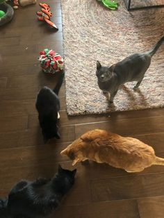 """Where is my treat?!"" Wet Noses Pet Sitting Fort Collins, Loveland, Pet Sitter, Dog Walker, Cat Sitter #cats #cat"
