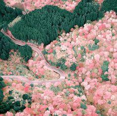 いいね!4,751件、コメント4件 ― RETRIP<リトリップ>国内さん(@retrip_nippon)のInstagramアカウント: 「【RETRIP×桜】 奈良県にある世界遺産「吉野山」。山の中におよそ3万本もの桜が密集する日本屈指の桜の名所で、今がまさに見頃です。こちらのお写真はドローンで撮影されたものです。圧巻の美しさですね。…」