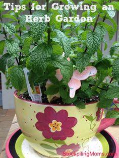 Tips for growing an herb garden