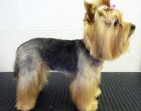 Dog Grooming Examples | Pet Universe - Professional Cat & Dog Grooming