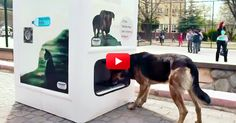 This Machine Feeds Stray Dogs In Exchange For Recycling Bottles! What An Awesome Idea! | The Animal Rescue Site Blog