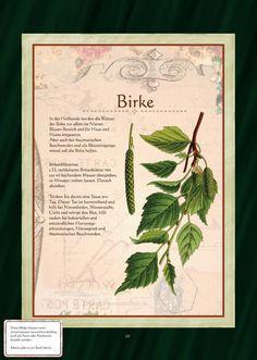 Birke                                                       …
