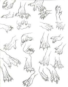 An appealing fuck-ton of werewolf references. Werewolves are a tad simpler to define than aliens or natural deformities; virtually every werewolf is depicted as (obviously) a half human half wolf. In virtually every instance, the human grows larger,. Drawing Poses, Drawing Tips, Drawing Sketches, Drawing Ideas, Sketching, Drawing Hands, Animal Sketches, Animal Drawings, Drawing Animals