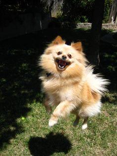 スーパーハイテンションな犬画像:ハムスター速報