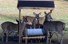 Elk Hunting 101 - Way Outdoors Deer Corn Feeder, Deer Feeder Plans, Deer Feeder Diy, Deer Hunting Tips, Hunting Guns, Elk Hunting, Turkey Hunting, Hunting Stuff, Deer Food