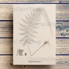 Fern, Antique botanical print, Illustration download, Fern wall art, Graphics, Digital images, Fern print, Print vintage JPG PNG 300dpi. ALL FERN PRINTS: https://www.etsy.com/shop/LizasDigitalVintage?ref=l2-shopheader-name&search_query=fern COLOR FERN PRINTS: