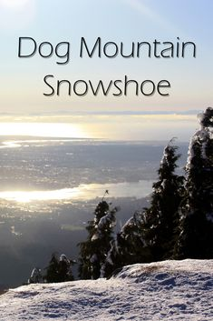 The Dog Mountain winter trail is a great snowshoe trail in Mount Seymour Provincial Park, North Van. Here is everything you need to know about the trail. Trail Guide, Snowshoe, Guide Dog, North Vancouver, Best Hikes, Winter Months, Awkward, Great Places, Trek