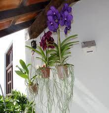 Resultado de imagen para orquideas aereas